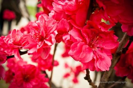 Flores en el Palacio de Osaka