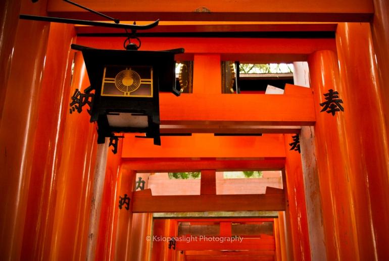 Farolillos del recorrido en las puertas Torii