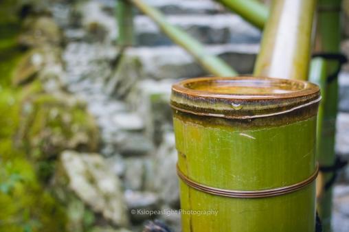 Bambú con agua