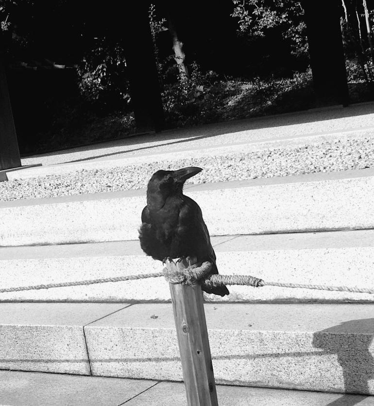 Cuervo en santuario de yoyogi