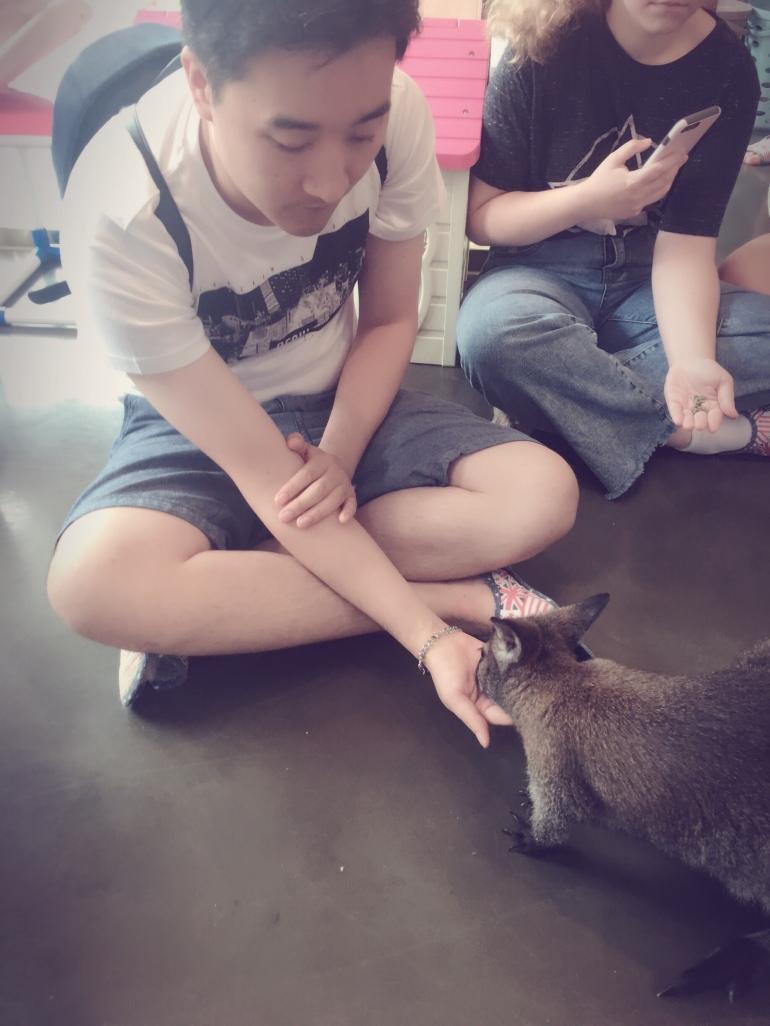 Alimentando a un canguro